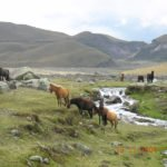 Wildpferde im Nationalpark Cotopaxi