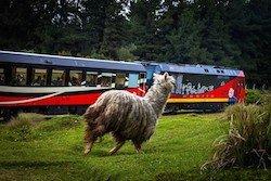 Zugfahrt auf der Strasse der Vulkane, Ecuador