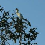 Wildlife Amazonasgebiet