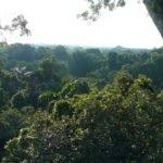 Urwaldgebiet Ecuador