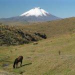 Cotopaxi mit Wildpferd