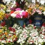Cuenca - Blumenmarkt