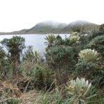 Naturreservat El Angel, Norden Ecuador