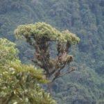 Nebelwald bei Quito