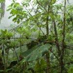 Nebelwald Reserva Yanacocha bei Quito