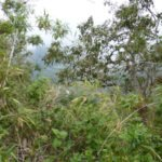 Vegetation im Pululahua Krater bei Quito, Ecuador