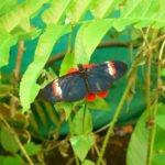 Schmetterling Nebelwald in Ecuador